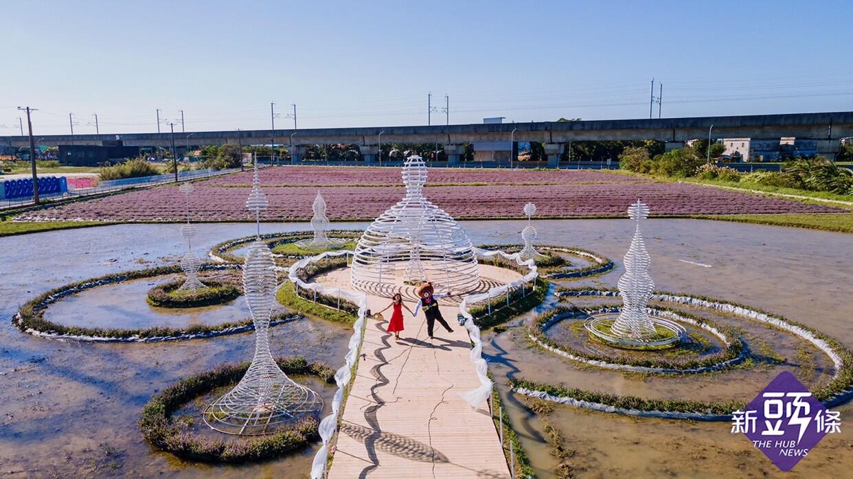 2020桃園仙草花節開幕倒數!5.8公頃紫色狂潮來襲 12.5萬株仙草花打造浪漫仙境