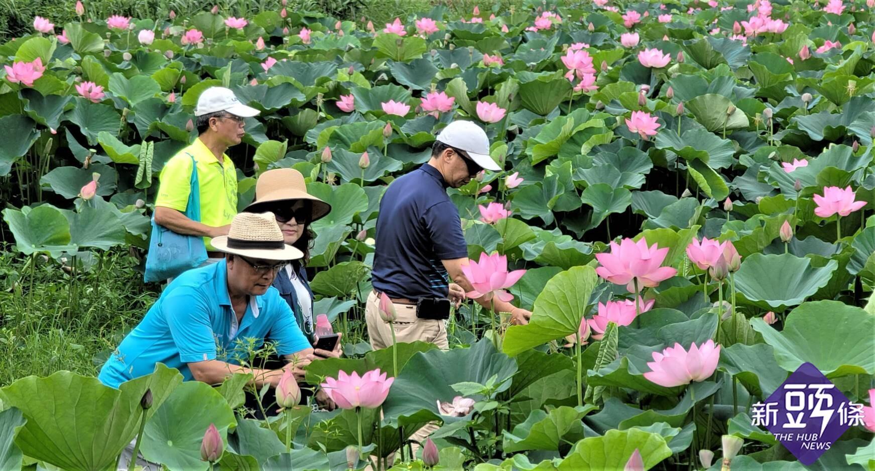 慢遊白河蓮花季 跨域農村體驗趣